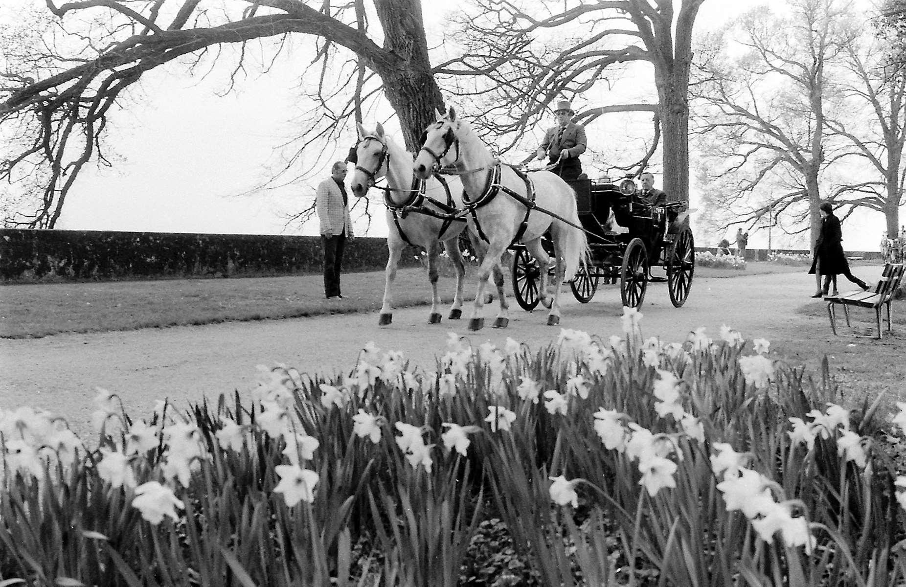D'une simple exposition florale  à une véritable tradition morgienne