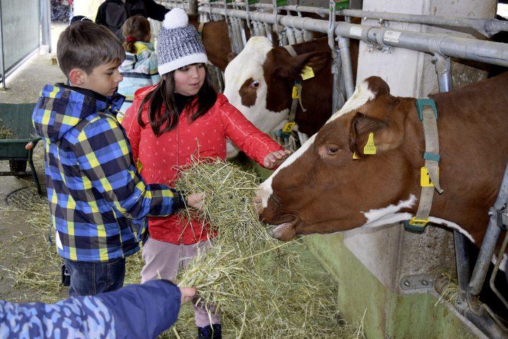 Jeunes élèves en visite à la ferme
