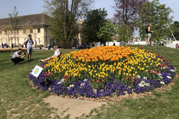 Une foule considérable pour les tulipes