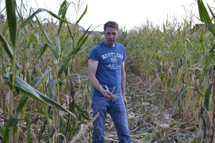 Le sanglier ciblé par les agriculteurs
