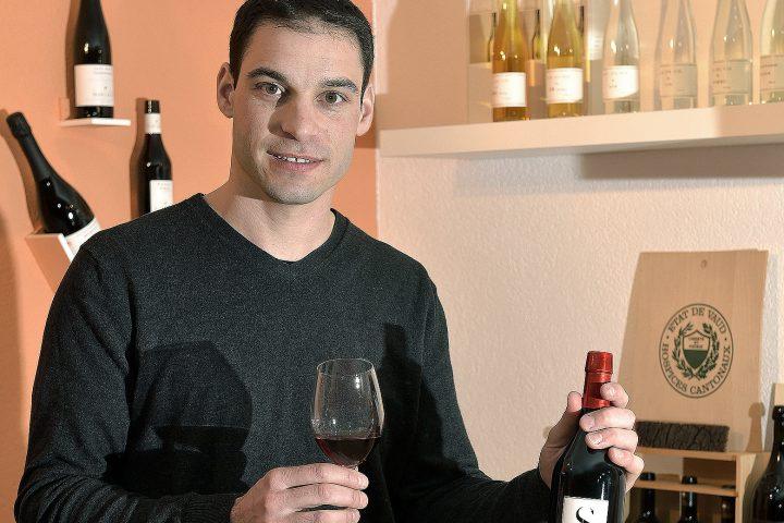 Le millésime 2015 promet des vins au fort potentiel