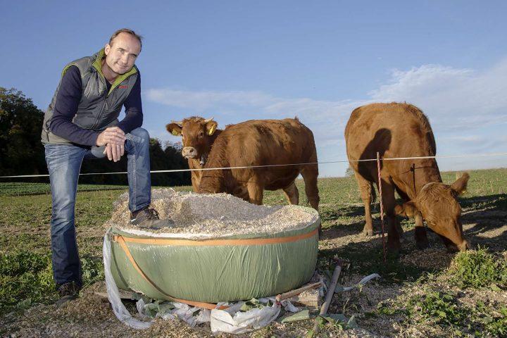 Les vaches sont aussi au régime sec!