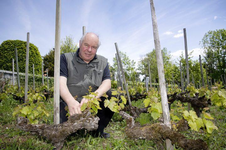«Le réchauffement climatique a un impact sur la vigne»