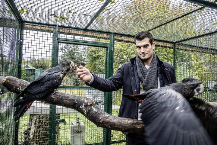Il vole au secours des perroquets