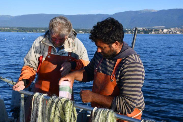 6h30 - Du côté des féras, la pêche est plutôt bonne.
