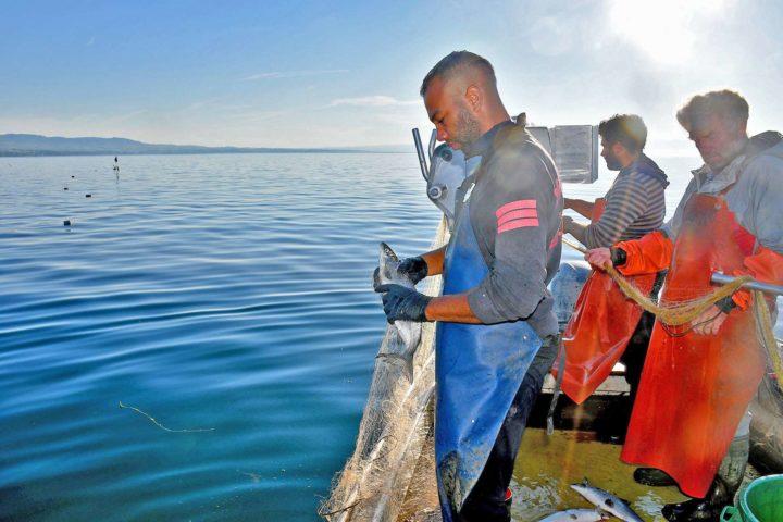 Jérémie Clerc récupère les poissons qui se sont laissés prendre au piège.