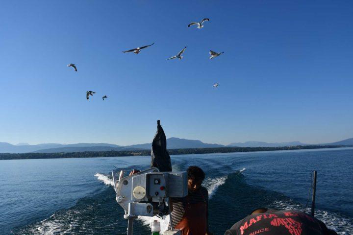 Le retour se fait sous l'escorte des mouettes qui sentent le poissons frais. Photo: Rempe