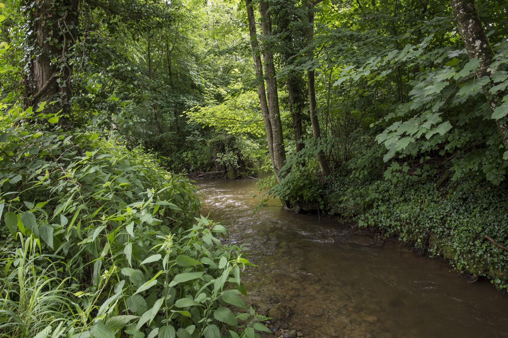 Pesticides et médicaments dépassent les limites dans les rivières, dont le Boiron