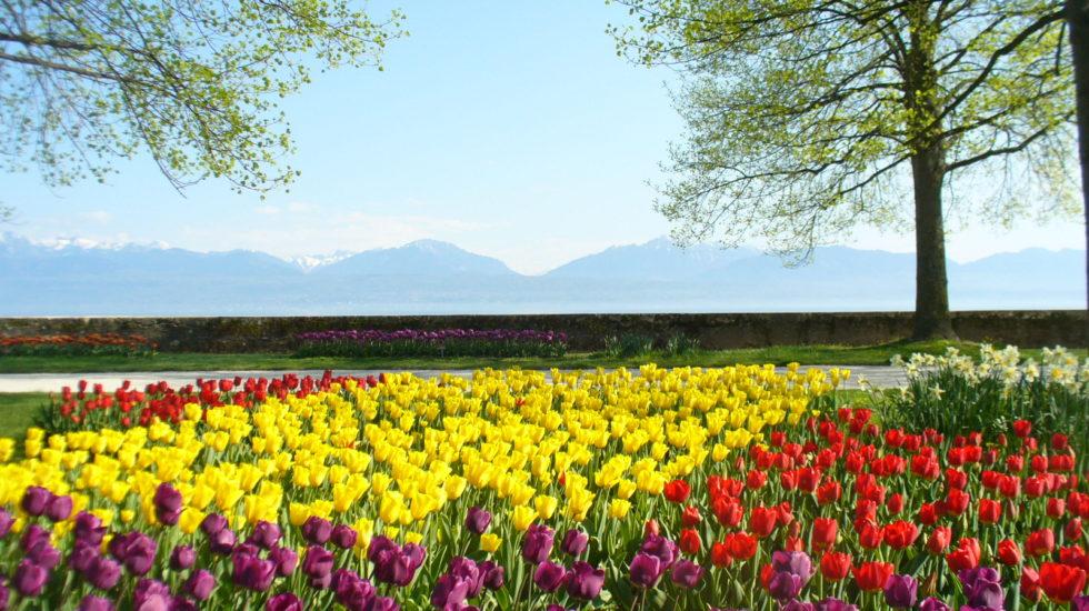 Subvention pour les rendez-vous floraux à Morges?
