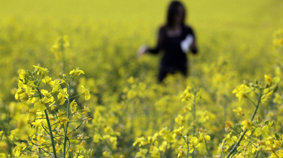 La saison des pollens toujours plus intense et précoce