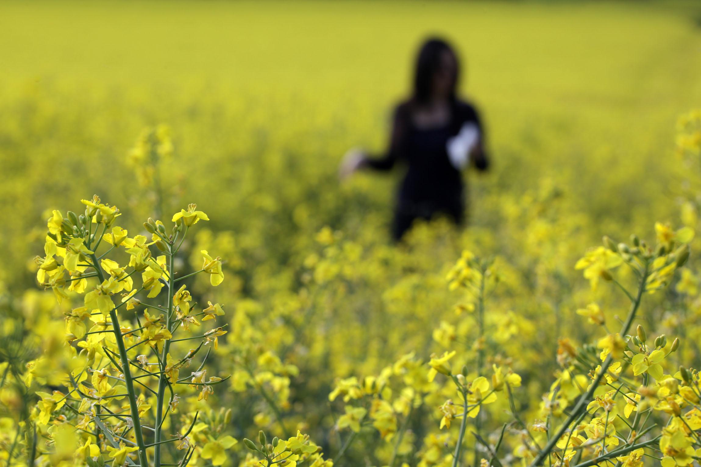 Les pollens font leur entrée en scène