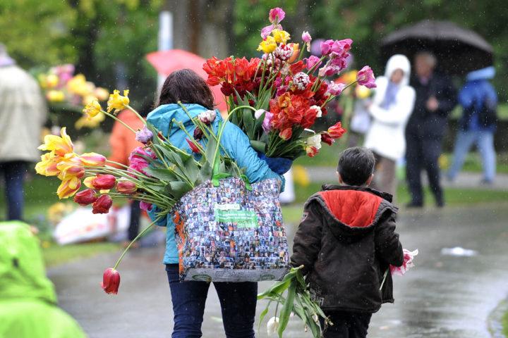Morges, le 15 mai 2013, mise à disposition du public des bulbes de tulipes exposées au parc de l'Indépendance/ © 24Heures/Alain Rouèche