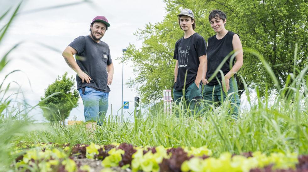 La révolution agricole pas à pas